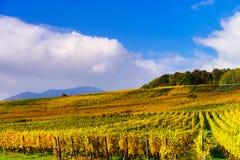 Herbstliche Farben von alsacien Weinberge, Frankreich Lizenzfreie Stockfotos