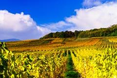 Herbstliche Farben von alsacien Weinberge, Frankreich Lizenzfreies Stockbild
