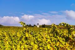 Herbstliche Farben von alsacien Weinberge, Frankreich Stockfotos
