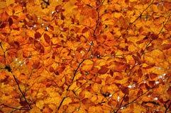 Herbstliche farbige Blätter Lizenzfreie Stockbilder