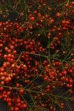Herbstliche Früchte. stockfotos