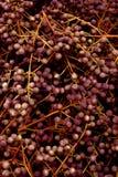Herbstliche Früchte stockfotos