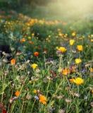Herbstliche Gartenblumen Lizenzfreies Stockfoto