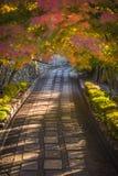 Herbstliche Gasse, sehr Weichzeichnung lizenzfreie stockfotos