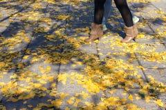 Herbstliche gefallene Blätter Stockfotos
