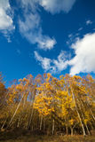Herbstliche gelbe Bäume unter einem bewölkten blauen Himmel Stockbilder
