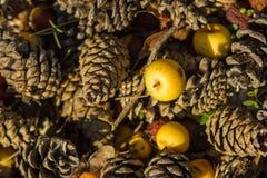 Herbstliche Hintergründe mit gelbem Apfel Lizenzfreie Stockfotos
