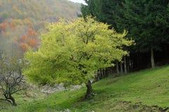 Herbstliche Kontraste Stockbild