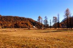 Herbstliche Landschaft der goldenen Wiese Stockbild