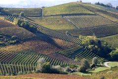 Herbstliche Landschaft der Reben und der Hügel in Langhe Stockfotografie