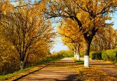 Herbstliche Landschaft im Park Stockfotos