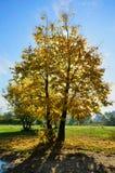 Herbstliche Natur Stockfoto