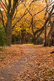 Herbstliche Parkszene Stockbild