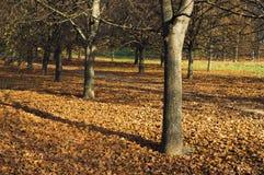Herbstliche Parkszene mit Gasse Lizenzfreie Stockfotos