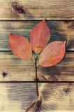 Herbstliche Persimone verlässt auf einem antiken hölzernen Hintergrund Lizenzfreie Stockfotos
