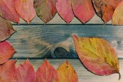 Herbstliche Persimone verlässt auf einem antiken hölzernen Hintergrund Lizenzfreies Stockfoto