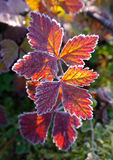 Herbstliche Rotblätter Lizenzfreies Stockbild