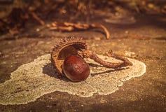Herbstliche Stilllebenzusammensetzung mit chesnut Oberteil Lizenzfreie Stockfotos