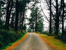 Herbstliche Straße voll von Blättern aus den Grund stockfoto