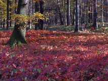 Herbstliche Szene Lizenzfreie Stockbilder