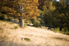 Herbstliche Szene im Wald Lizenzfreies Stockfoto
