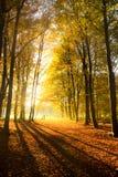 Herbstliche Träume Lizenzfreies Stockbild