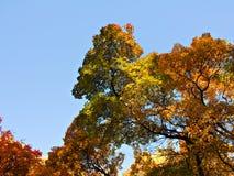 Herbstliche Verzierung Stockbilder