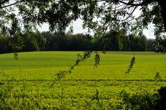 Herbstliche Waldfreiheit Lizenzfreie Stockfotografie