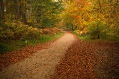 Herbstliche Waldszene Stockfoto