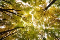 Herbstliche Waldumgebung Lizenzfreies Stockfoto