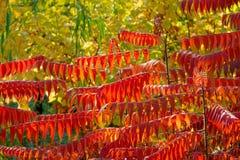 Herbstliche Waldung lizenzfreies stockfoto