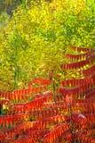 Herbstliche Waldung lizenzfreie stockfotografie
