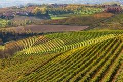 Herbstliche Weinberge auf den Hügeln von Piemont, Italien Stockbild