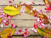 Herbstliche Zusammensetzung von bunten Blumen stockfoto