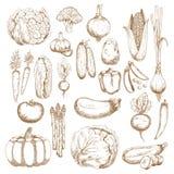 Herbstlicher Überfluss an kürzlich geerntetem Gemüse vektor abbildung