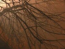 Herbstlicher Abend Stockbild