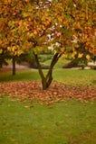 Herbstlicher Baum bei Sonnenuntergang Stockbild