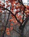 Herbstlicher Baum im Nebel Stockbild