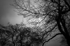 Herbstlicher Baummonochromhintergrund stockfotos