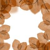 Herbstlicher Blattrand lizenzfreie stockfotografie