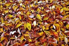 Herbstlicher Boden Lizenzfreies Stockfoto