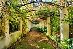 Herbstlicher Bogen abgedeckt durch Rebe Lizenzfreies Stockfoto