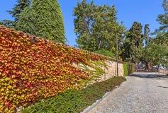 Herbstlicher Efeu auf Backsteinmauer Lizenzfreie Stockfotos