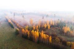 Herbstlicher eindeutiger Bereich im Nebel stockfoto
