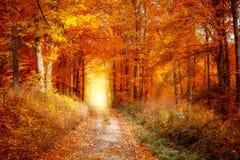 Herbstlicher farbiger Wald Lizenzfreies Stockfoto