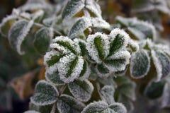 Herbstlicher Frost Stockfoto