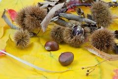 Herbstlicher Fruchtaufbau, Kastanien Stockfotos