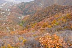 Herbstlicher Gebirgswald Lizenzfreies Stockfoto