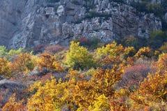 Herbstlicher Gebirgswald Stockfotografie