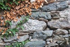 Herbstlicher Hintergrund lizenzfreie stockfotos